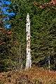 Dead tree - Hornisgrinde.jpg