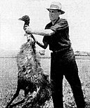An emu killed by Australian soldiers