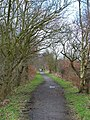 Deerness Valley Path, near Esh Winning - geograph.org.uk - 146443.jpg