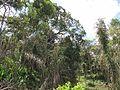 Degradação Florestal Amazônia 21.jpg