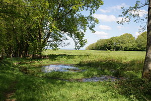 Aston Rowant National Nature Reserve - Dew-pond at Aston Rowant NNR