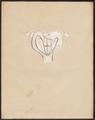 Didelphis spec. - baarmoeder - 1700-1880 - Print - Iconographia Zoologica - Special Collections University of Amsterdam - UBA01 IZ20300134.tif