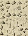 Die Versteinerungen des rheinischen Schichtensystems in Nassau. Mit einer kurzgefassten Geognosie dieses Gebietes und mit steter Berücksichtigung analoger Schichten anderer Lander (1850) (14761199806).jpg