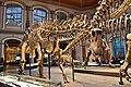 Dinosaur Hall, Berlin Natural History Museum (1) (28403438849).jpg