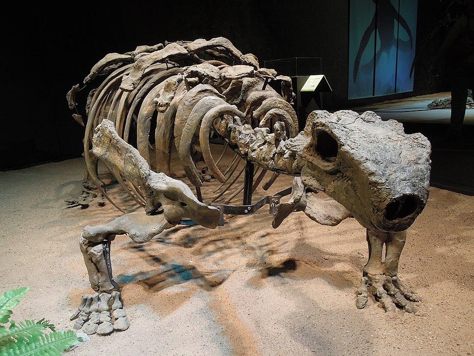 Dinosaurium, Talarurus plicatospineus 2