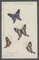 Diorhina - Print - Iconographia Zoologica - Special Collections University of Amsterdam - UBAINV0274 049 20 0019.tif