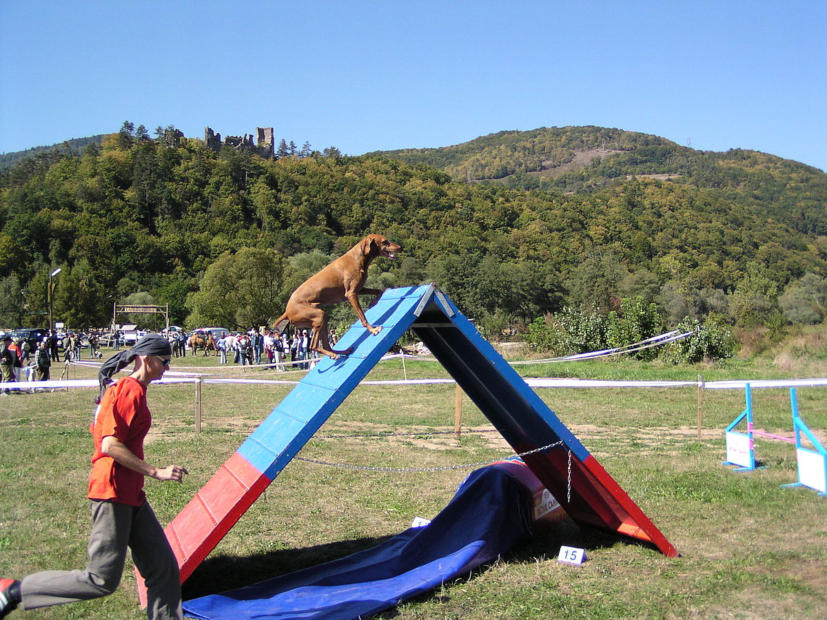 File Dog Going Up An Agility A Frame Jpg Wikimedia Commons