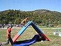 Dog going up an agility A-frame.jpg