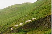 Donegal, Irlanda, 2001-08, DD 08.jpg
