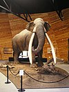 Model of a mastodon