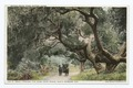 Drive through Oaks, Hope Ranch, Santa Barbara, Calif (NYPL b12647398-75625).tiff