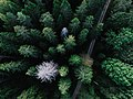 Drone Forest (Unsplash).jpg