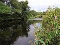 Drumragh River, Omagh - geograph.org.uk - 562821.jpg