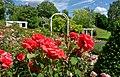 Duftende Schönheit, der Rosengarten im Kurpark Bad Mergentheim. 09.jpg