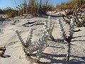Dunas de São Jacinto, Nature Reserve (8089852668).jpg