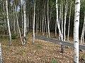 Dzerzhinsky District, Kaluga Oblast, Russia - panoramio (82).jpg