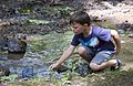 Each summer one of the most popular programs at Hungry Mother State Park is the Critter Crawl where the participants investigate what lives in a creek at the park. - AA (19122704531).jpg