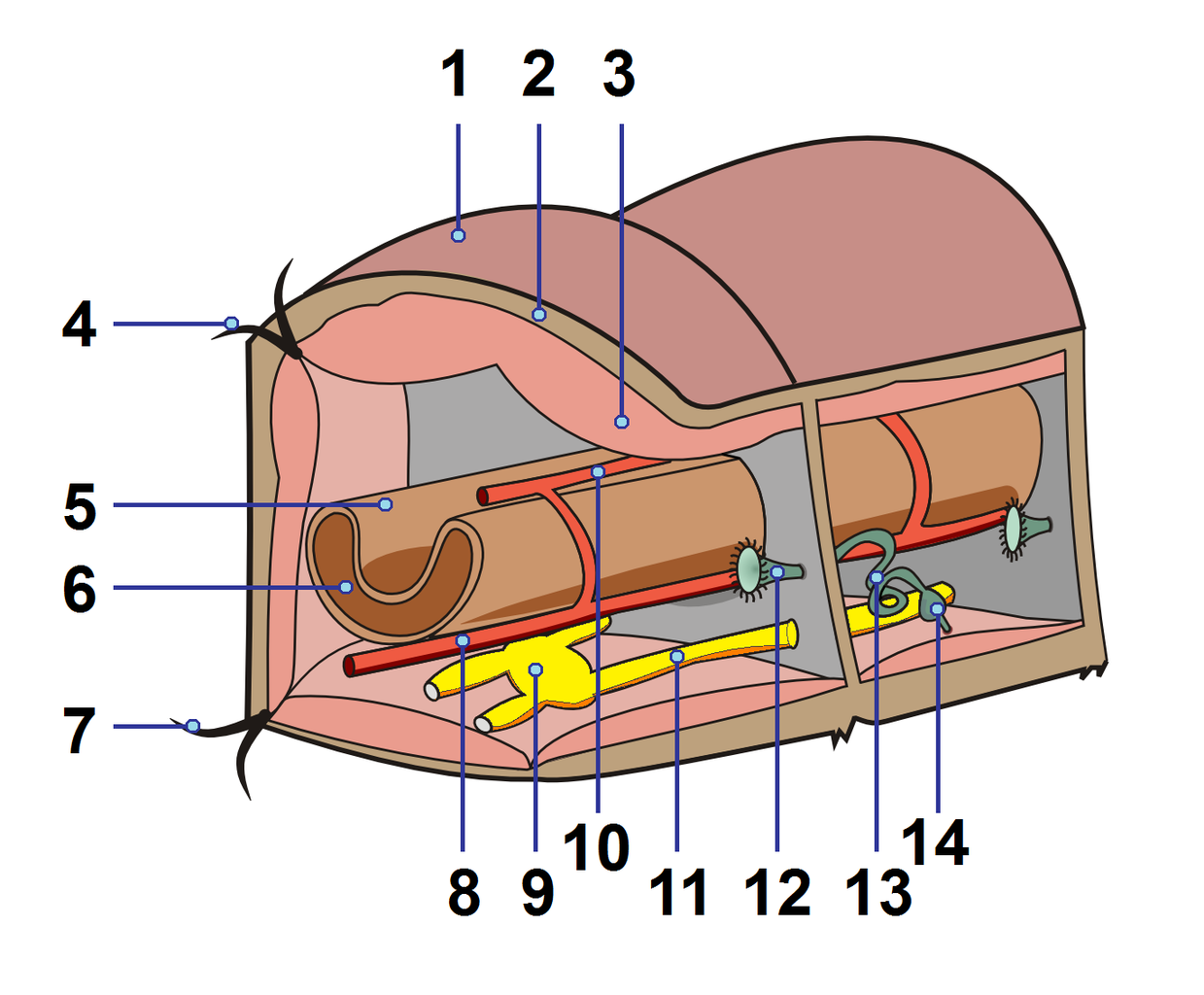 Exelent External Anatomy Of Earthworm Ideas - Human Anatomy Images ...
