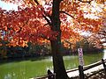 Echo Lake park in NJ with lake and tree and path and woman in early autumn.JPG