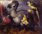 Edwards' Dodo.jpg