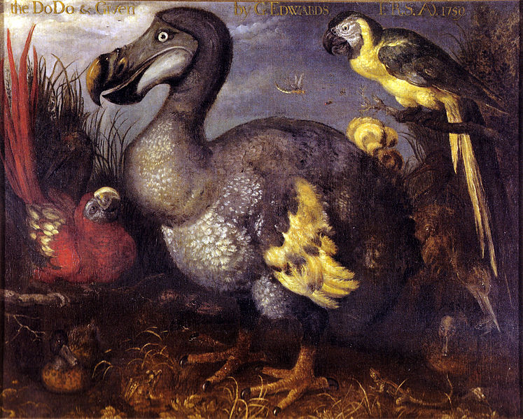 File:Edwards' Dodo.jpg