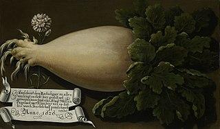 Giant radish