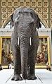 Eléphante Marguerite (ou Parkie) au Musée d'Orsay 07.jpg