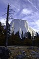 El Capitan with tree.jpg