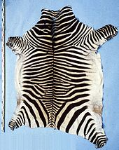 Mountain zebra hide
