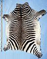 Equus zebra hartmannae fur skin.jpg