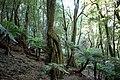Eucryphia Forest Preserve 3.jpg