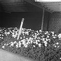 Ex-oesterkwekers in Yerseke halen de eerste champignons binnen, thermometer tuss, Bestanddeelnr 916-0728.jpg