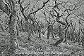 Exmoor- Weird Wood (5929645677).jpg