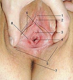 Original HYMEN porno beispiel, einschließlich Hymen