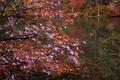 Fall-winecellarlake-tree - West Virginia - ForestWander.png