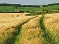 Farmland, East Ilsley - geograph.org.uk - 902351.jpg