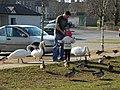 Feeding the birds, Enniskillen - geograph.org.uk - 1748799.jpg