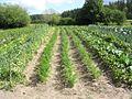 Field - panoramio - Aulo Aasmaa.jpg
