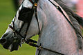 Fine Harness Horse at the 2009 Shelbyville Horse Show (3867466663).jpg