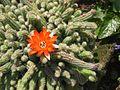 Fiore di cactus nel B&B ElmAgos in Udine....jpg