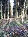Firebreak, Kimble Wood - geograph.org.uk - 97382.jpg