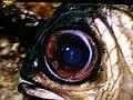 Fisheye (5189079460).jpg