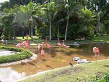 Flamingos01.JPG