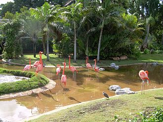 Honolulu Zoo - American flamingos featured at the entrance to the zoo