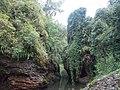 Flaura and Fauna in Shillong,Meghalaya.jpg