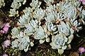 Flora de la Isla Sur-Nueva Zelanda10.JPG