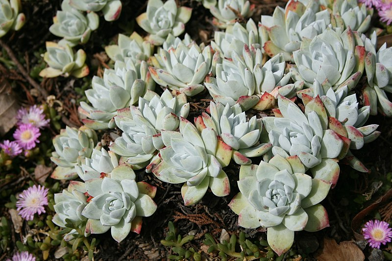 File:Flora de la Isla Sur-Nueva Zelanda10.JPG