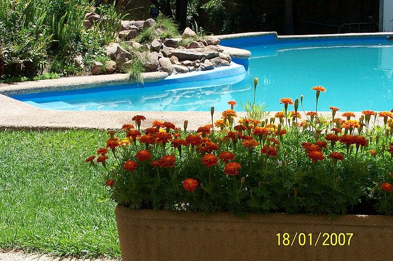 File flores en la piscina wikimedia commons - Piscina bagnolo mella ...