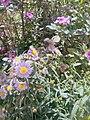 Flower's in the garden.jpg