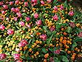 Flower-center130512.jpg